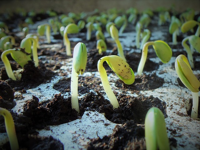 How to prevent seedling death