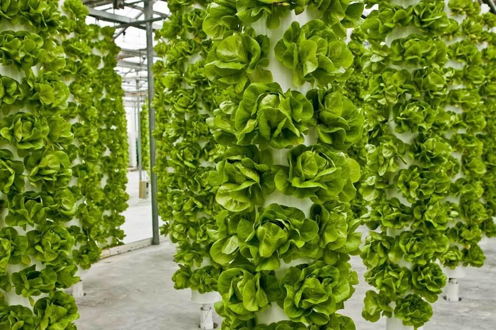 Pěstování indoor – Aeroponie – 2.díl