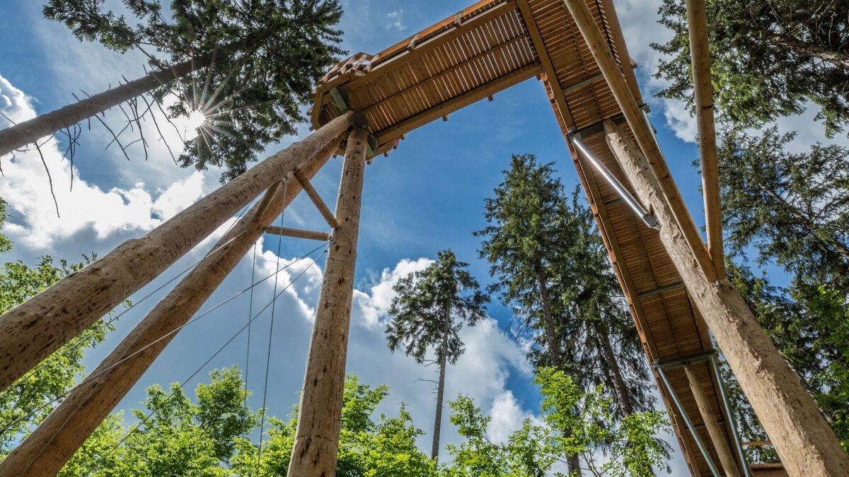 V Krkonoších mají novou stezku vedoucí korunami stromů. Měří přes jeden a půl kilometru