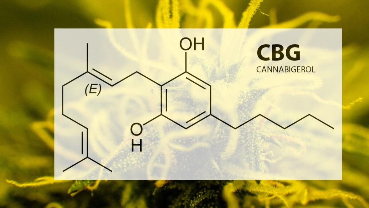 Co je CBG?