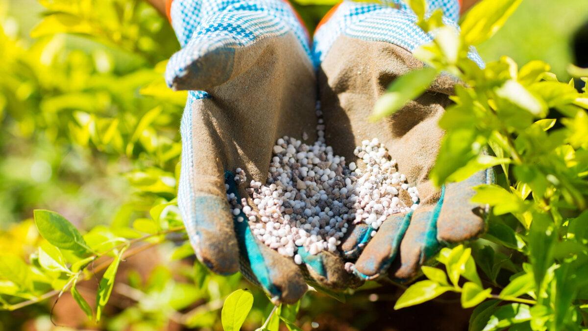 Jaká hnojiva použít? 2. část