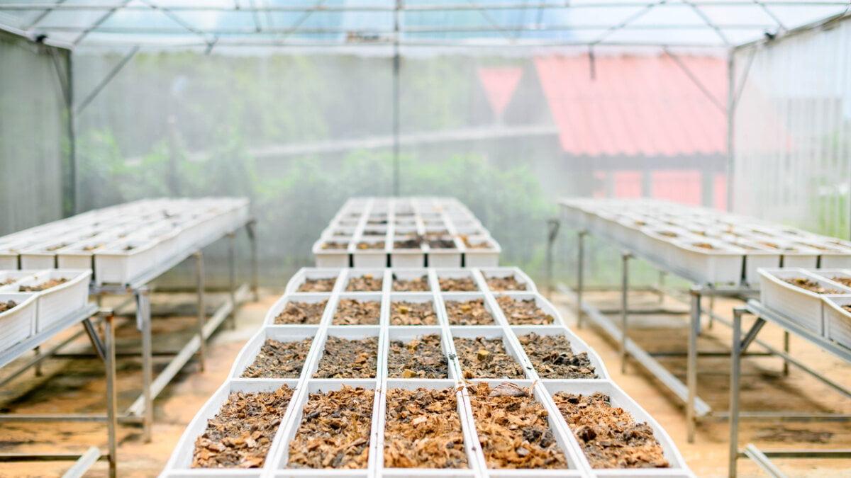 Jaká hnojiva použít? 3. Část
