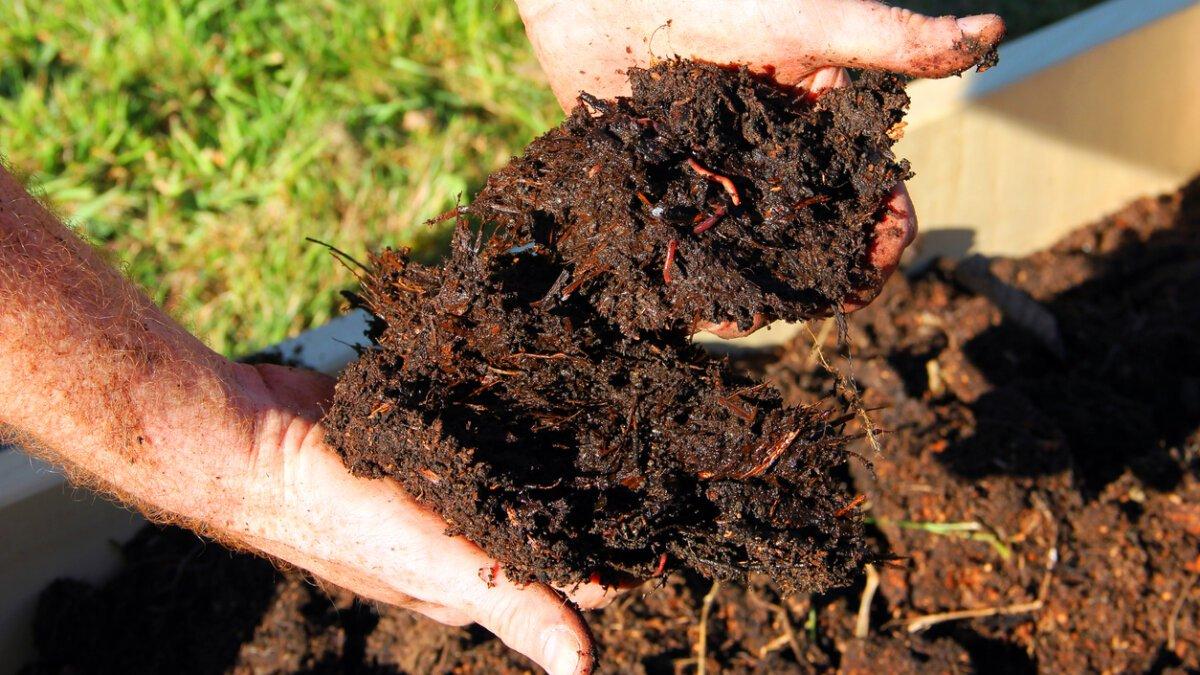 Jaká hnojiva použít? 6. Část